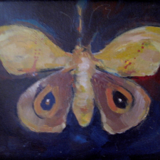 16-tiger-moth2-2016-oil-on-board-13-x1522