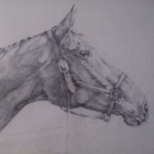 c-somerville_-paddy-pencil-on-paper-img_0353